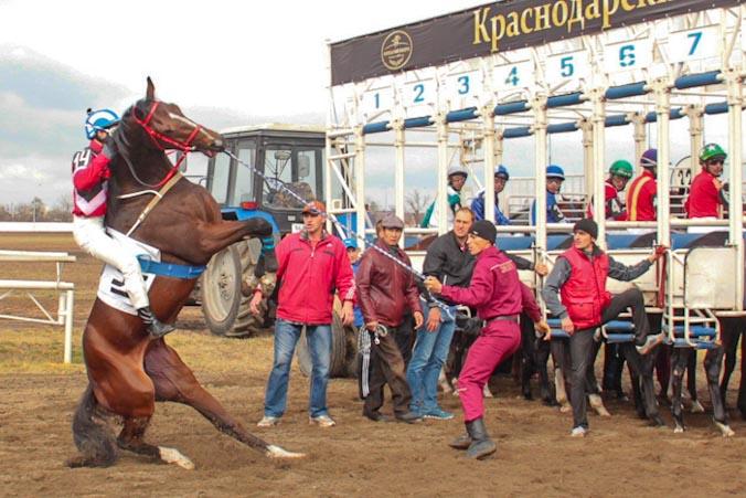 Закрытие скакового сезона на Краснодарском ипподроме. Фото: Александр Трушников/Великая Эпоха
