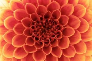 flower-shutterstock_96172658-WEBONLY-480x320