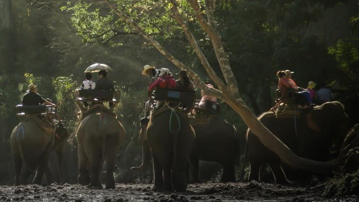 В Таиланде слон с россиянами на спине убежал в джунгли