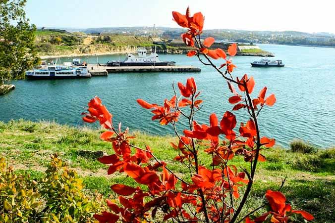Алая скумпия на фоне бухты. Фото: Алла Лавриненко/Великая Эпоха