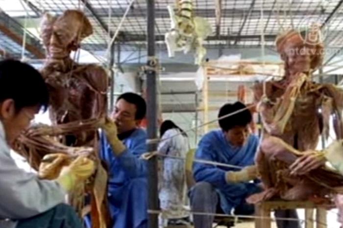 Рабочие обрабатывают пластинированные тела. Фото: скриншот/NTD