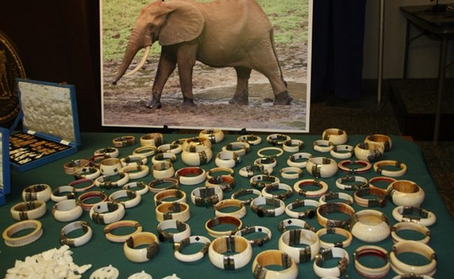 Китай является самым крупным нелегальным покупателем слоновой кости