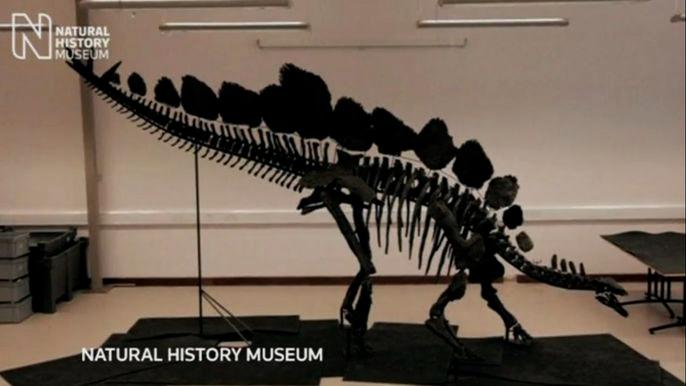 Размером скелет примерно с внедорожник - более 5,5 метров в длину и почти три метра в высоту. Скриншот видео.