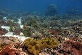 Учёные обнаружили самую глубоководную рыбу