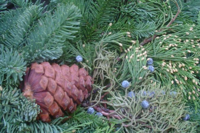 Хвойные деревья имеют приятный освежающий запах благодаря эфирным маслам. Conan Milner/Epoch Times