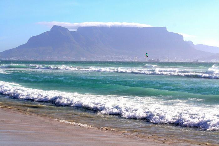 Турист в Кейптауне помог родиться трём акулятам после гибели их матери