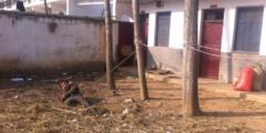 Китайский приют для бездомных похож на свалку