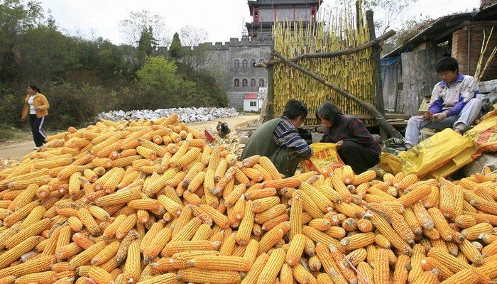 Власти Китая снова разрешили импорт продукции с ГМО