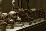 Учёные открыли новый вид древнего человека