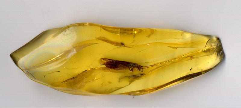 Янтарь с насекомым внутри. Фото: wikimedia.org