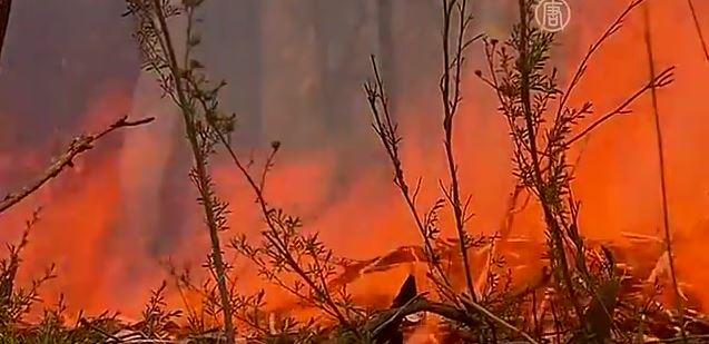 Австралийцы спасаются от пожара, оставляя дома (видео)