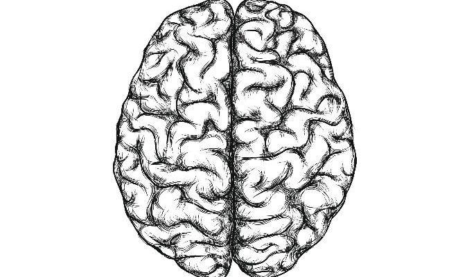 У вас в мозгу могут находиться клетки других людей