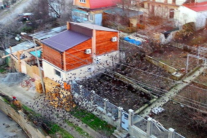 Тучи скворцов над городами Крыма. Фото: Алла Лавриненко/Великая Эпоха