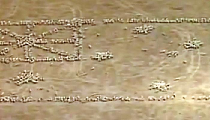 Патриотизм по-австралийски: флаг из 1030 овец (видео)