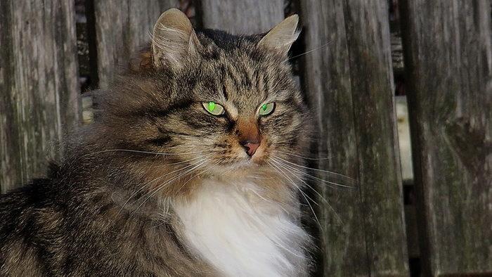 Инструкция по обращению с котами
