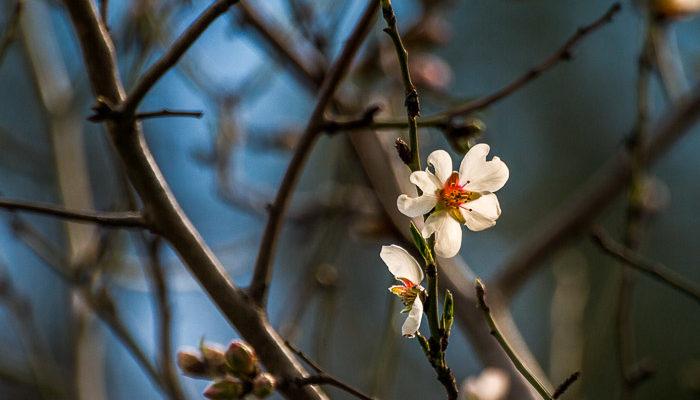 Чуть в стороне от шоссе… весна