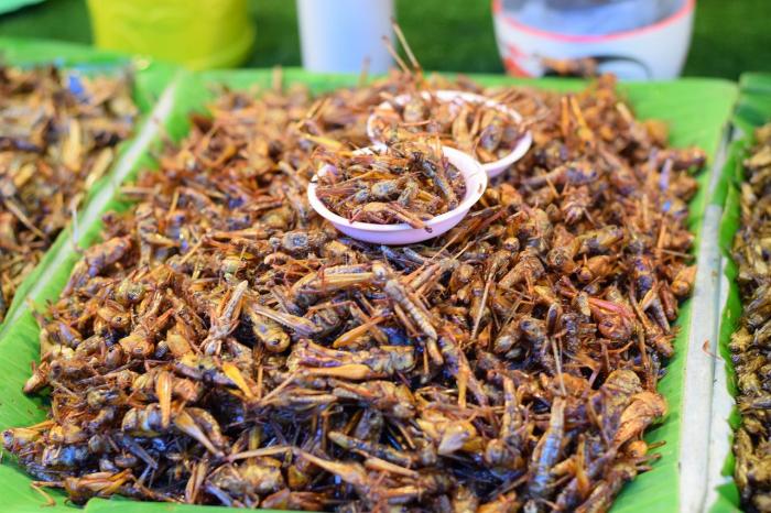 Съедобные насекомые появятся на полках магазинов Таиланда