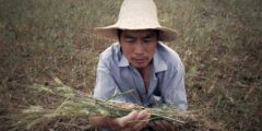 В Китае обостряется проблема продовольственной безопасности