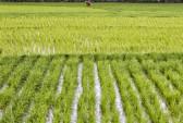 Китай, вода, учёные, сельскохозяйственные поля
