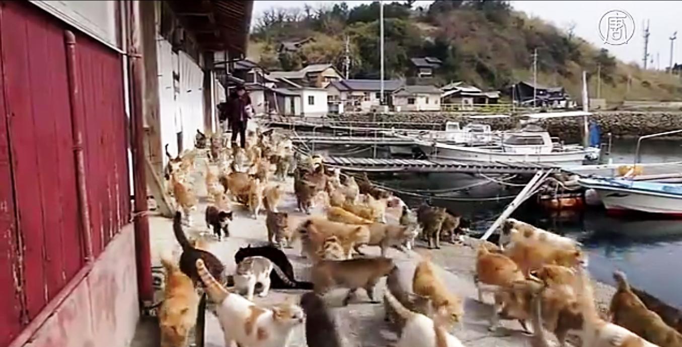 Официально здесь живет всего 22 человека, но при этом – более 120 кошек. Скриншот видео: Телеканал NTD
