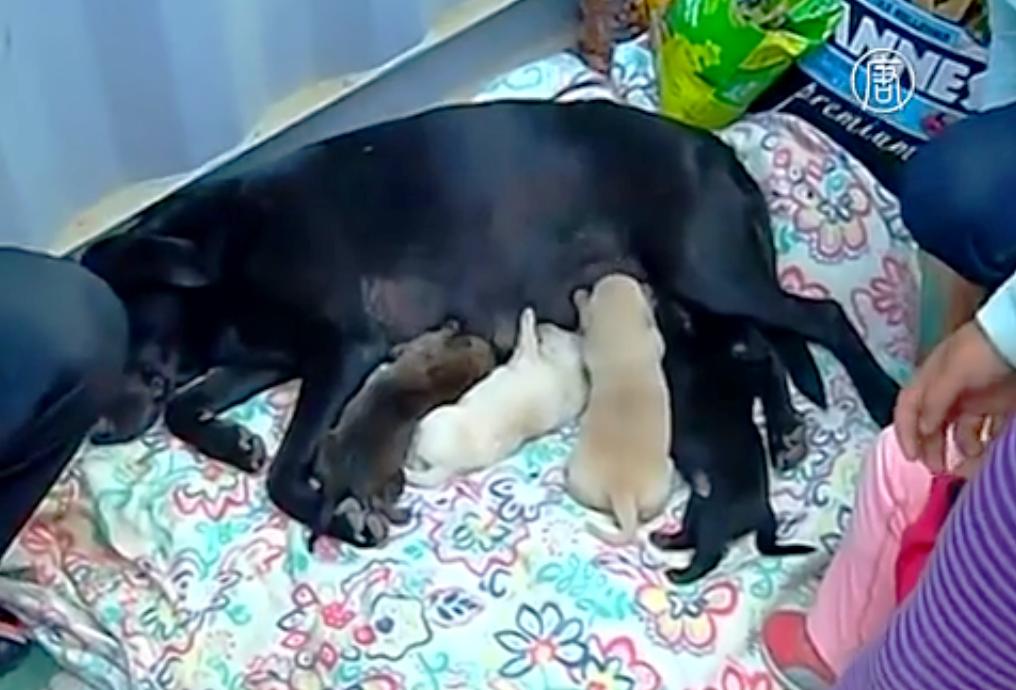 Собака произвела на свет потомство в условиях бушующей стихии. Скриншот видео: Телеканал NTD