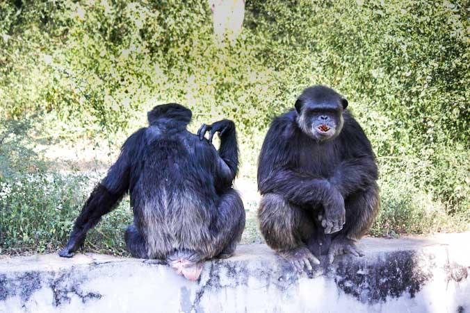 Хищников индийского зоопарка согревают электропечами