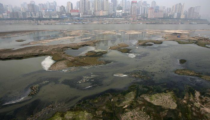 В грязных китайских реках водятся чёрные креветки