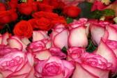 Роза. Зарубежные розы в нашем магазине! Фото: florastars.ru