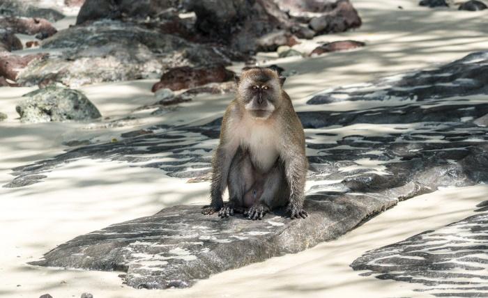 В Таиланде из-за засухи с гор спустились сотни обезьян