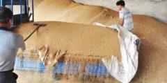 Китай имеет крупнейшие запасы зерна, но это не решит его проблем