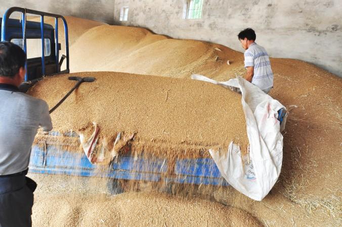 запасы зерна