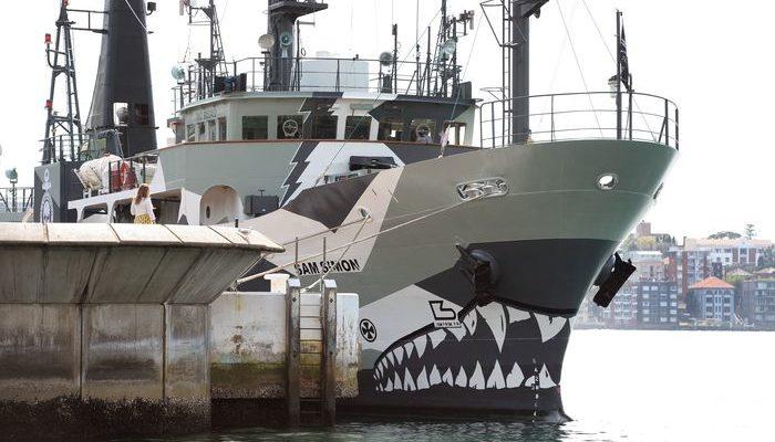 Судно экологов организации Sea Shepherd столкнулось с японским китобоем