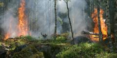 Лесные пожары добрались до Китая