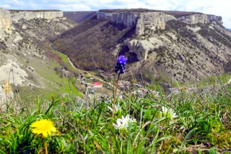 Первоцветы на скалах Бахчисарая. Фото: Алла Лавриненко/Великая Эпоха