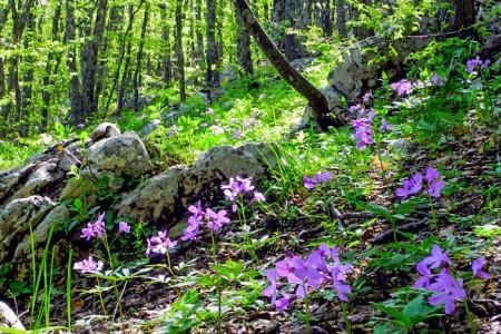Лесные поляны вдоль дороги на плато Ай-Петри. Фото: Алла Лавриненко/Великая Эпоха