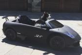 Диджей из Канады подарил своему коту Lamborghini. Фото: celebritycarsblog.com