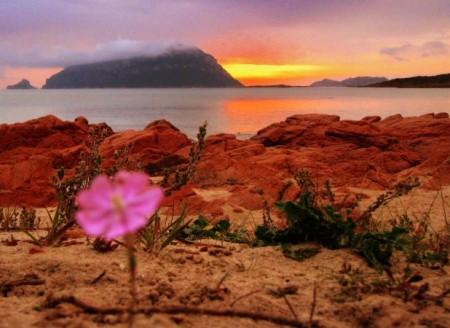 Для отдельных районов Сардинии, особенно на севере, характерны красные скалы и красная почва. Контраст между ярким цветом скал и голубым морем порождает удивительные по красоте пейзажи. Фото: Giovanni Manca