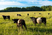 Россия, бюджет, регионы, скотоводство