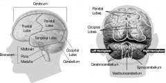 Ваш мозг уменьшается, как это остановить