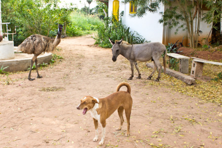 Необычные обитатели индийской фермы. Фото: Татьяна Виноградова/Великая Эпоха