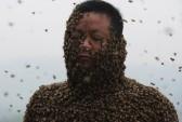Книга рекордов Гиннесса, рекорд, пчёлы