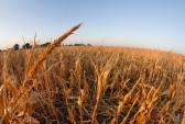 США, Nestle, Калифорния, водные ресурсы, засуха