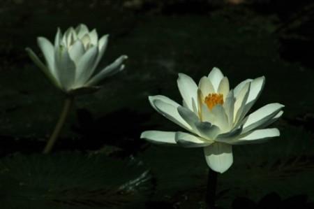 2004-6-22-lotus17-480x319
