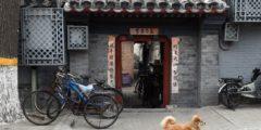 Китаянка предложила свой дом в качестве награды за пропавшую собаку