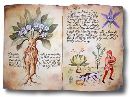 Древняя книга о целебных растениях. Фото: ua.hotlist.biz