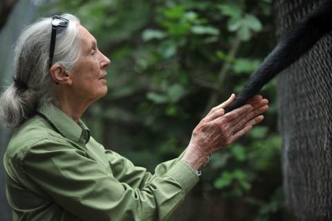 антрополог и приматолог Джейн Гудолл