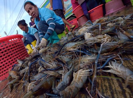 TO GO WITH STORY: France-Thailand-fishing-food-rights-work,FOCUS by Emmanuelle Michel with Delphine Thouvenot Workers select prawns at a market in Samut Sakhon province, a suburb of Bangkok on October 22, 2014.  Thailand went on a charm offensive in defence of its prawn industry this week, seeking to convince Europeans that it is responding to allegations of slavery and torture in its fisheries sector.    AFP PHOTO / PORNCHAI KITTIWONGSAKUL        (Photo credit should read PORNCHAI KITTIWONGSAKUL/AFP/Getty Images)