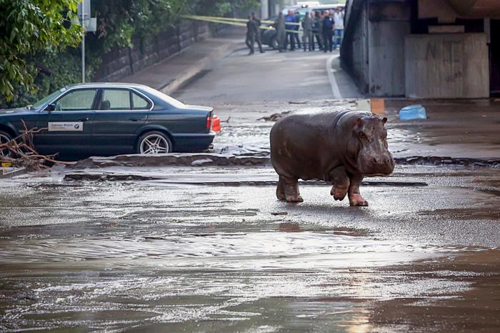 В Тбилиси прошла акция в поддержку директора зоопарка