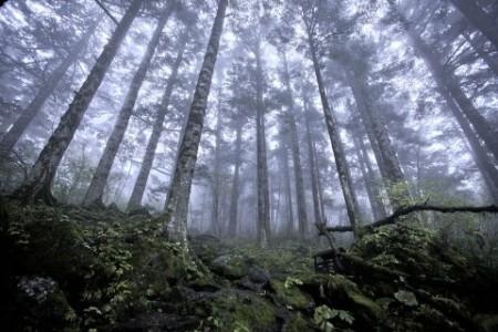 Shennongjia_virgin_forest-480x320