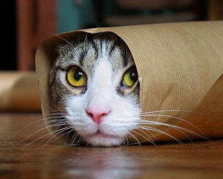кошка, кот